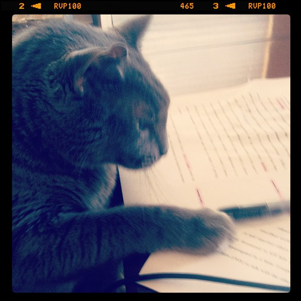 Editor Kitty
